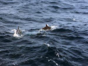 ver en São Miguel cetaceos