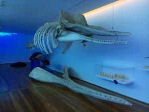 Museu ver en Sao Miguel