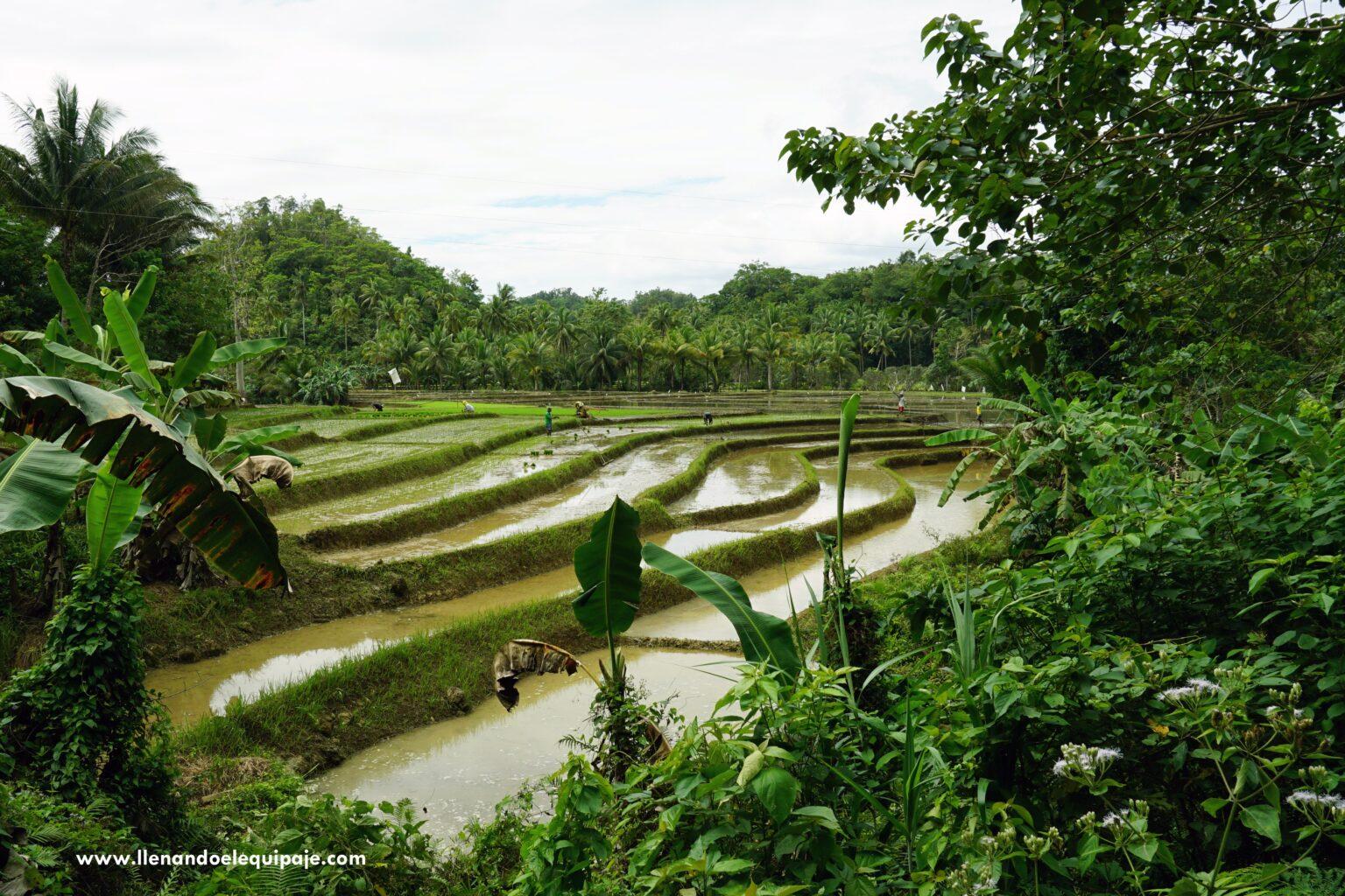 Bohol en Filipinas