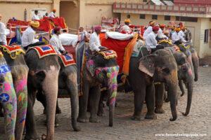 Elefantes en Jaipur